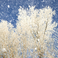 Snow photography forest in winter ice storm winter weather tree photography - Winter White