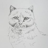 Cat Drawing Original Art Ink Drawing Tom Cat Art Black and White Pet Art Cat Illustration 8 x 10