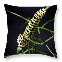 "Swallowtail Caterpillar 14"" x 14"" Throw Pillow for Sale by Priya Ghose"