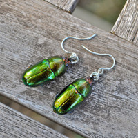Floating Real Stag Beetle Earrings Green &amp; Rust Moonrise Kingdom Movie