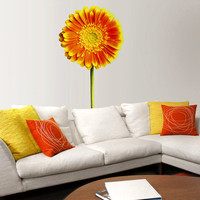 Orange Daisy - Wallflower