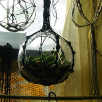 Hanging glass and macrame terrarium