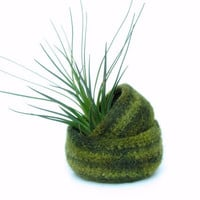Green felted bowl / Two nesting bowls in fall forrest green / Cozy gift Air plant holder