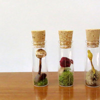 Wild Mushroom Specimens, Dried Mushrooms, Curiosities, Instant Natural Collectio, Specimen Jars, Miniature Terrariums, Mushroom Terrariums