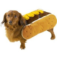 Amazon.com: Casual Canine Polyester Hot Diggity Dog Costume, Medium, Mustard: Pet Supplies