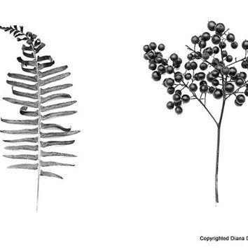 Fine Art Photography - Fern and Berry Bush- Black and White  Photography, Wall Art, Home Decor