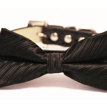Black Bow Tie attached to Black leather dog collar- Chic Wedding dog bow tie, Pet wedding accessory