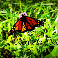 8 X 10 Photograph Of Monarch Butterfly