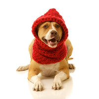 Hoodwinked Slouchy Hooded Dog Cowl: Cozy Dog Sweater Hoodie - Available in 18 Colors - Pet Halloween Costume- Great Gift for Dog Lovers