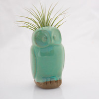 Owl air plant pod in mint