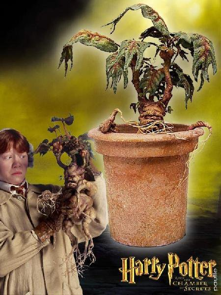 Harry Potter and the Chamber of Secrets (2002), Mandrake screaming plant, original / screen-used