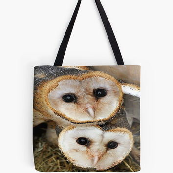 Two baby barn owls