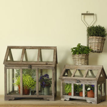 Traditional Glasshouse Plant Terrarium