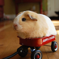 Radio Flyer » Funny, Bizarre, Amazing Pictures & Videos