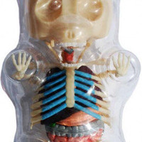 Gummi Bear Anatomy Figure Clear 9
