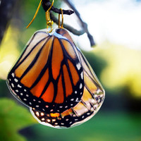 Real Butterfly Wing Earrings - Black and Orange Monarch (Danaus plexippus)