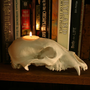 Black Bear Skull Replica Candle Holder