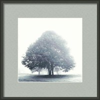 Trees In The Fog Framed Print By Alexandra Cook