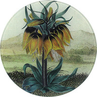 The Collection: Round: 8&quot; Plates: fritillaria
