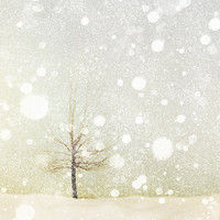 Landscape photography, bare tree, falling snow, winter white, bokeh, holiday decor, Christmas, snowflake, neutrals, minimalist, modern decor