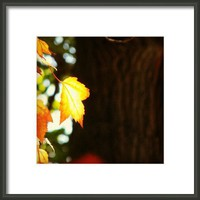 Glowing  Framed Print By Alexandra Cook
