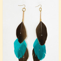 Pretty Plumes Earrings in Brown & TurquoiseTURQ - Francesca's Collections