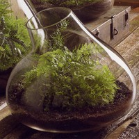 Medium Recycled Glass Bubble Terrarium