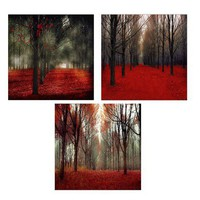 Canadian Maple Forest Photos Set of 3 Autumn Tree by Raceytay