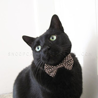 Cat Bow Ties- FOLLOW ME AND ENJOY<3