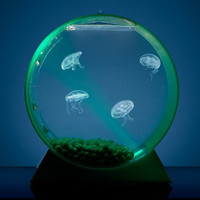 Jellyfish Art: Jellyfish Tank with 3 Jelly Kit, at 10% off!