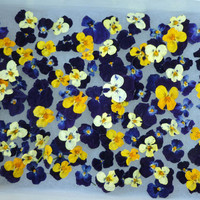 Wedding Flowers Confetti 1500 Dried REAL Violas by pleasanthedges
