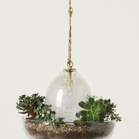 Terrarium Pendant Lamp - Anthropologie.com