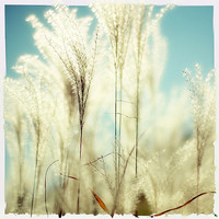 Breath Of Fresh Air fine art photo print baby by GoldenSection