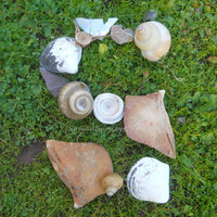 Alphabet Letter S Photograph Digital Sea Shells