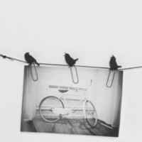UrbanOutfitters.com > Birds on a Wire Photo Clip - Set of 8