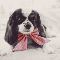 Pink Polka Dots Dog Ribbon Bow Tie Victorian Collar - Pretty in Pink - For the Ladies (S/M)