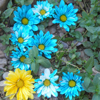 Alphabet Letter E Photograph Digital Blue flowers