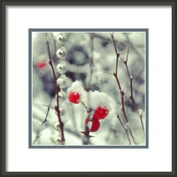 Berries And Snow Framed Print By Alexandra Cook
