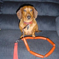 Dachshund Hot Dog Leash by RedWagonWieners on Etsy
