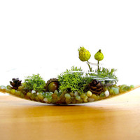 Pretty Little Lichen Vessel Terrarium