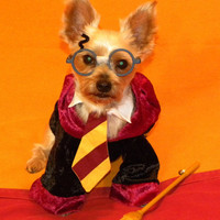 Harry Pawter Dog Costume ALL SIZES by GypsyEyesClothing