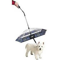 Pet Umbrella at Curiobot