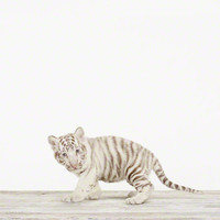 Baby White Tiger No. 2 - The Animal Print Shop by Sharon Montrose