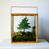 Miniature Forest Plant Kit For Terrarium by CaptainCat on Etsy