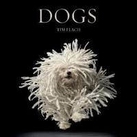 Amazon.com: Dogs (9780810996533): Lewis Blackwell, Tim Flach: Books