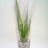 Air Plant, Glass Air Plant holder, Glass Beads, Tillandsia