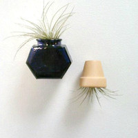Magnet, Live Plant Magnet. Blue Glass, Mini Flower Pot, Air Plant Holder, Kitchen Magnet, Tillandsia