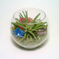 Air Plant Terrarium, Butterfly, Flower and Glass Air Plant Holder, Tillandsia, Reindeer Moss, Floral Moss