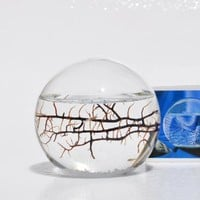 Small EcoSphere