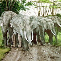 11 x 14 inch signed print of elephant scene called by richardlowe